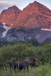 maroon bells with moose