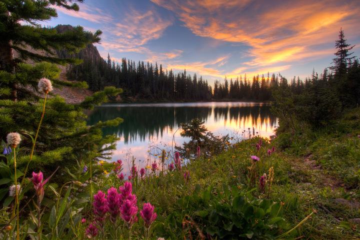 Aspen Wildflowers 6