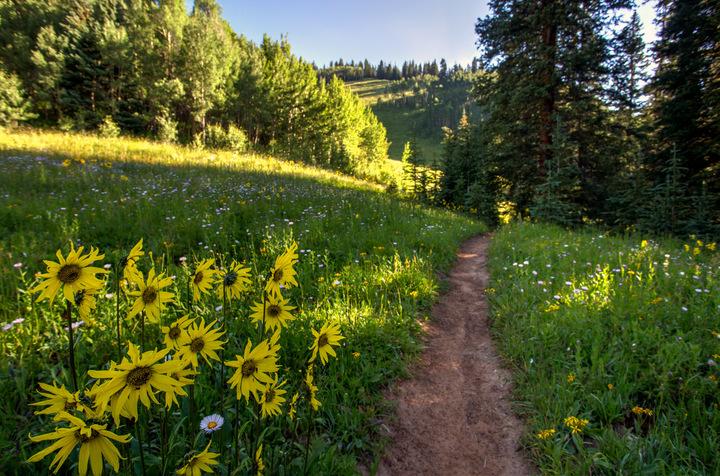 Aspen Wildflowers 5