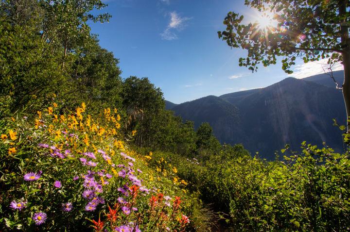Aspen Wildflowers 4