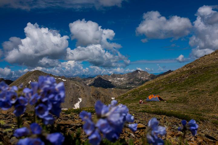 Aspen Wildflowers 13