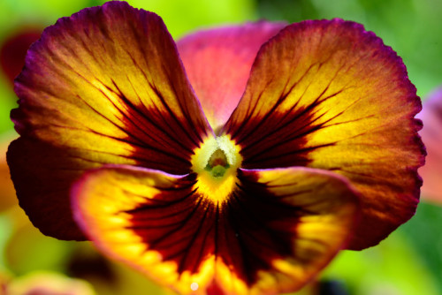 Aspen Wildflowers 7