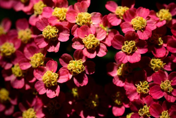 Aspen Wildflowers 11