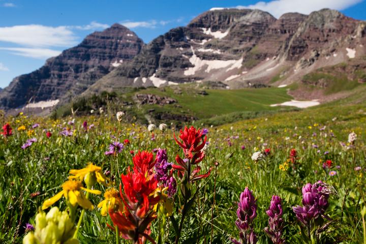 Aspen Wildflowers 1