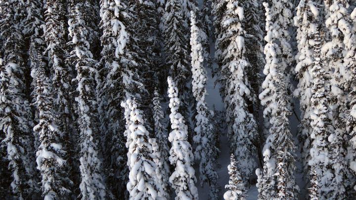 Trees on Aspen Highlands