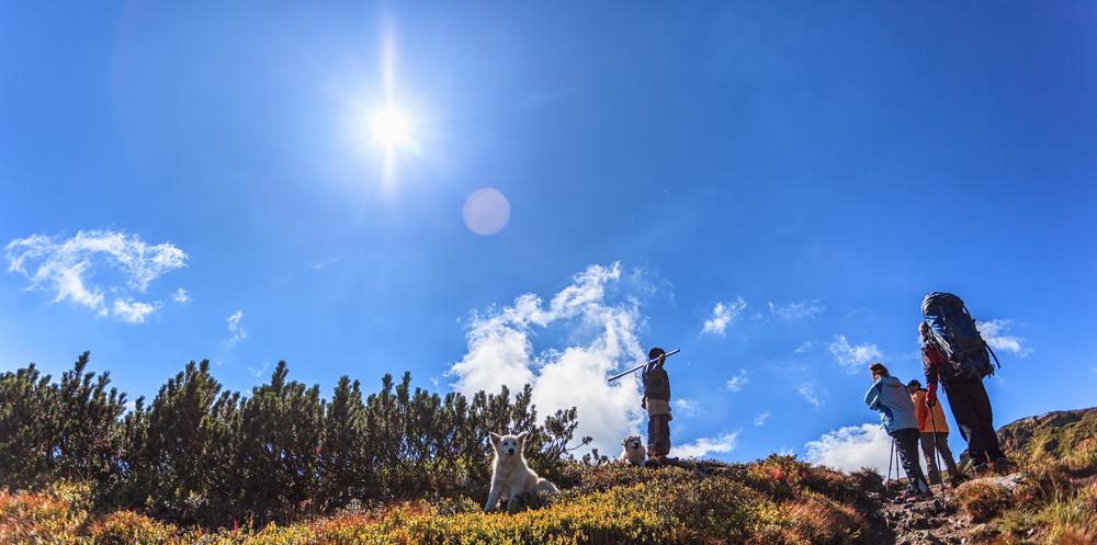 Dog Friendly Hiking Trails in Aspen