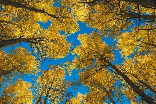 fall drives around aspen