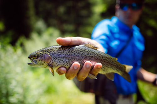 Where to Fly Fish in Sun Valley