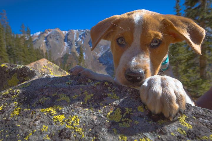 Pet Shops in Aspen