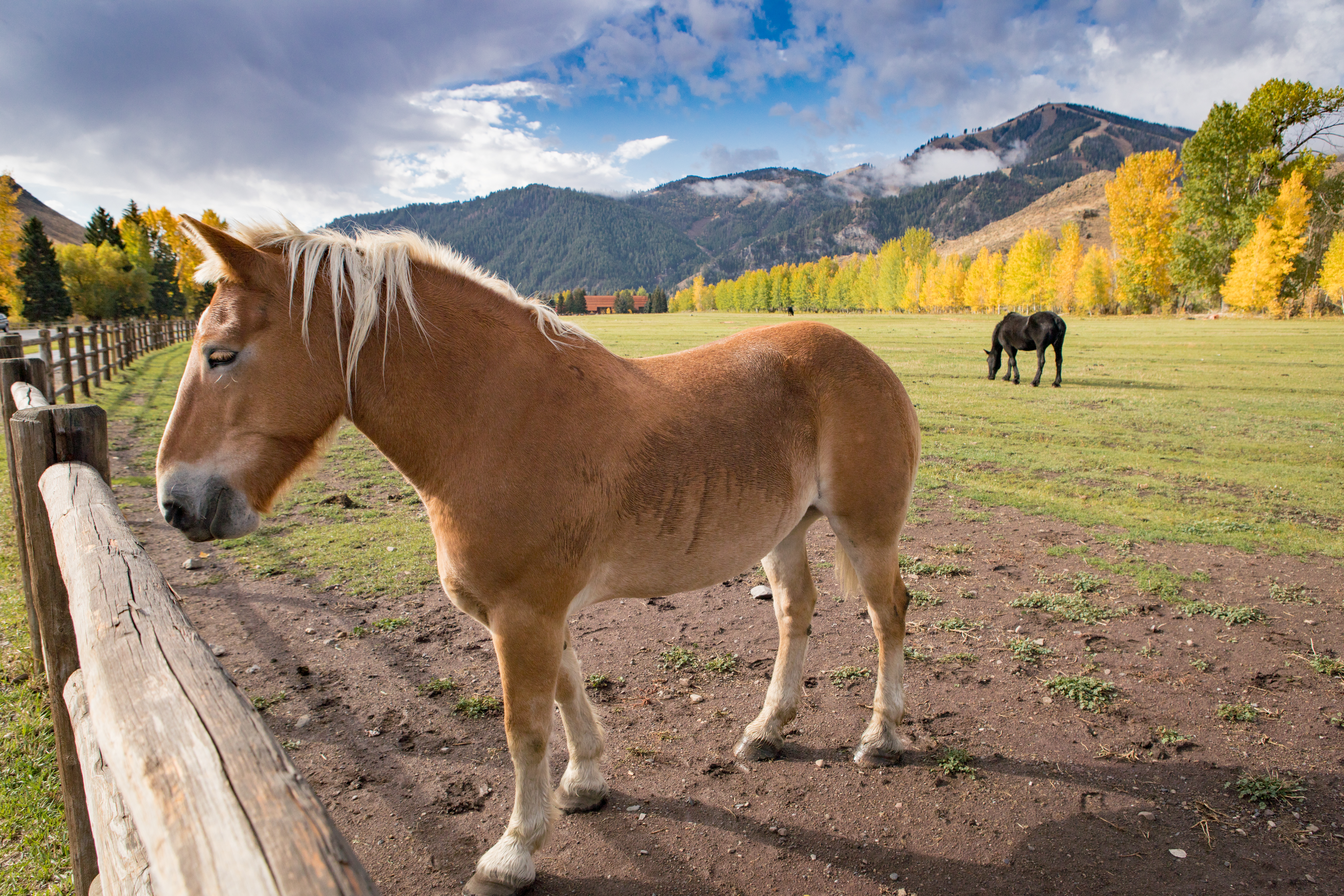 Sun Valley Horse