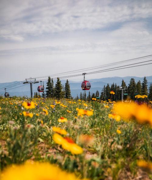 Memorable Summer - Aspen Mountain